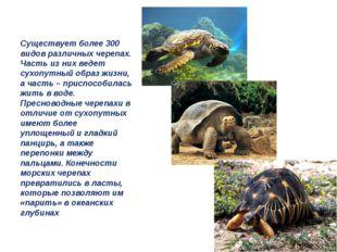 Существует более 300 видов различных черепах. Часть из них ведет сухопутный о
