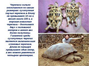 Черепахи сильно отличаются по своим размерам: сухопутная паучья черепаха в дл