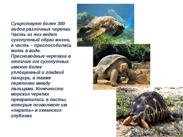 Существует более 300 видов различных черепах. Часть из них ведет сухопутный о...