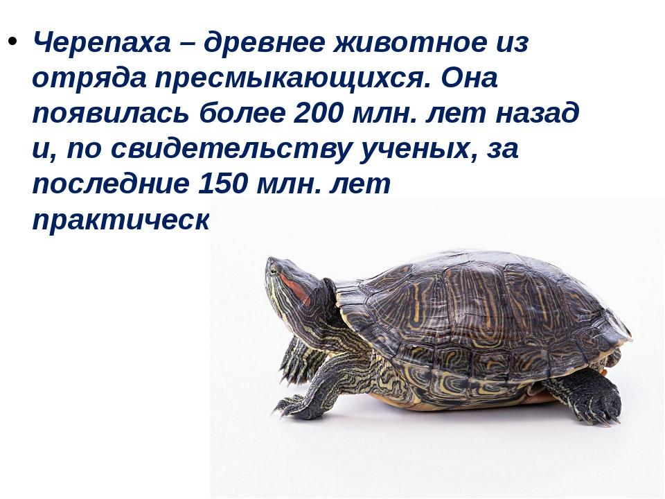 Черепаха – древнее животное из отряда пресмыкающихся. Она появилась более 200...