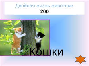 Кошки Двойная жизнь животных 200