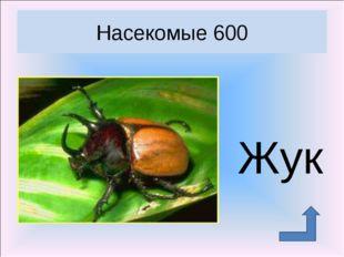 Жук Насекомые 600