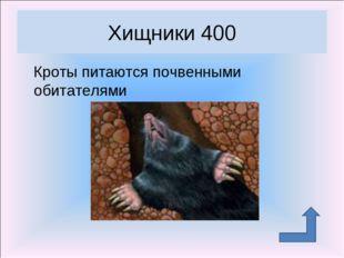 Кроты питаются почвенными обитателями Хищники 400