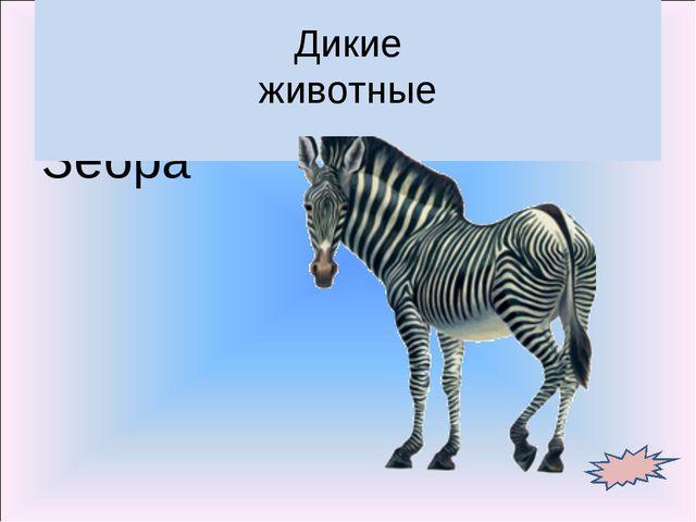 Зебра Дикие животные
