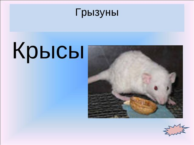 Крысы Грызуны