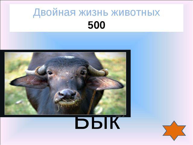 Бык Двойная жизнь животных 500