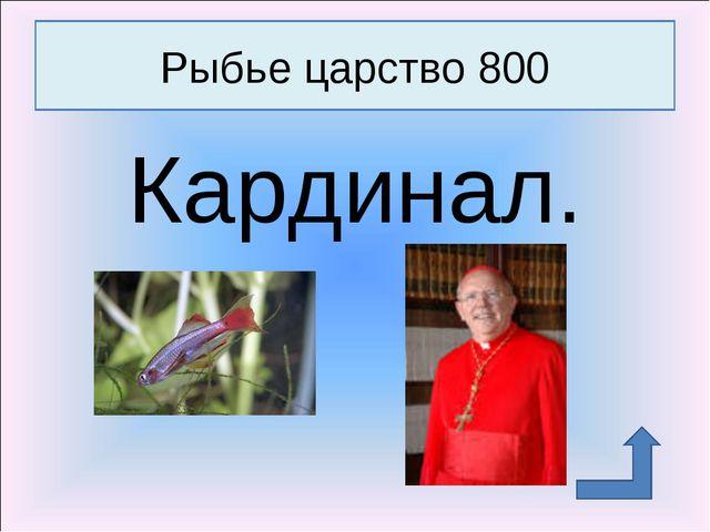 Кардинал. Рыбье царство 800