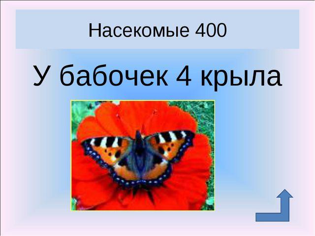 У бабочек 4 крыла Насекомые 400