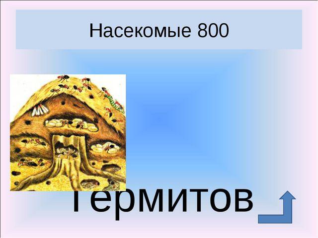 Термитов Насекомые 800