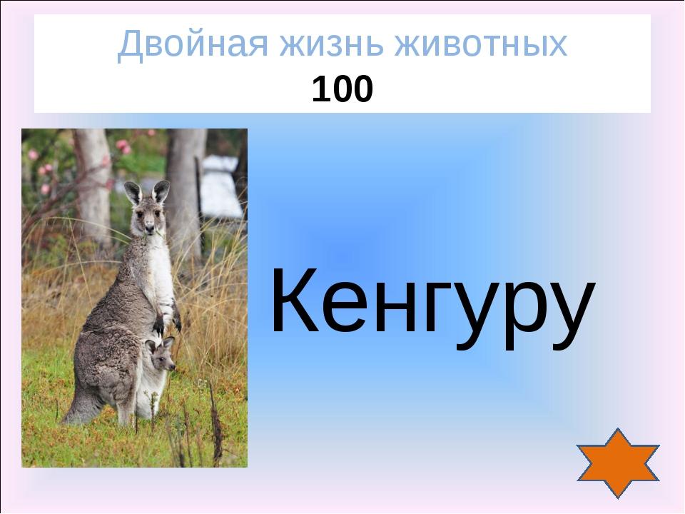 Кенгуру Двойная жизнь животных 100