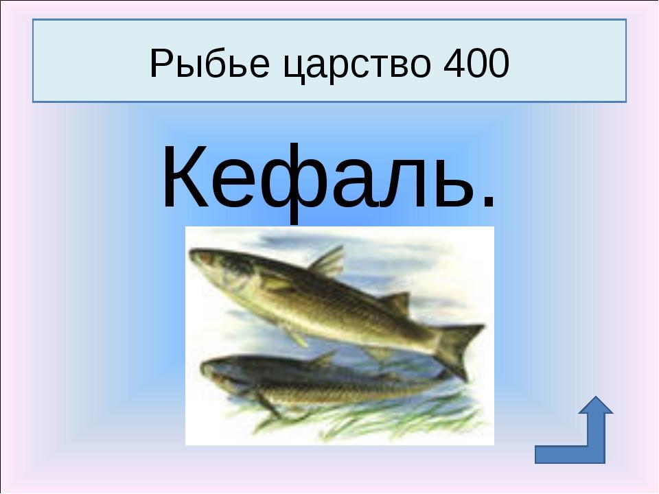 Кефаль. Рыбье царство 400