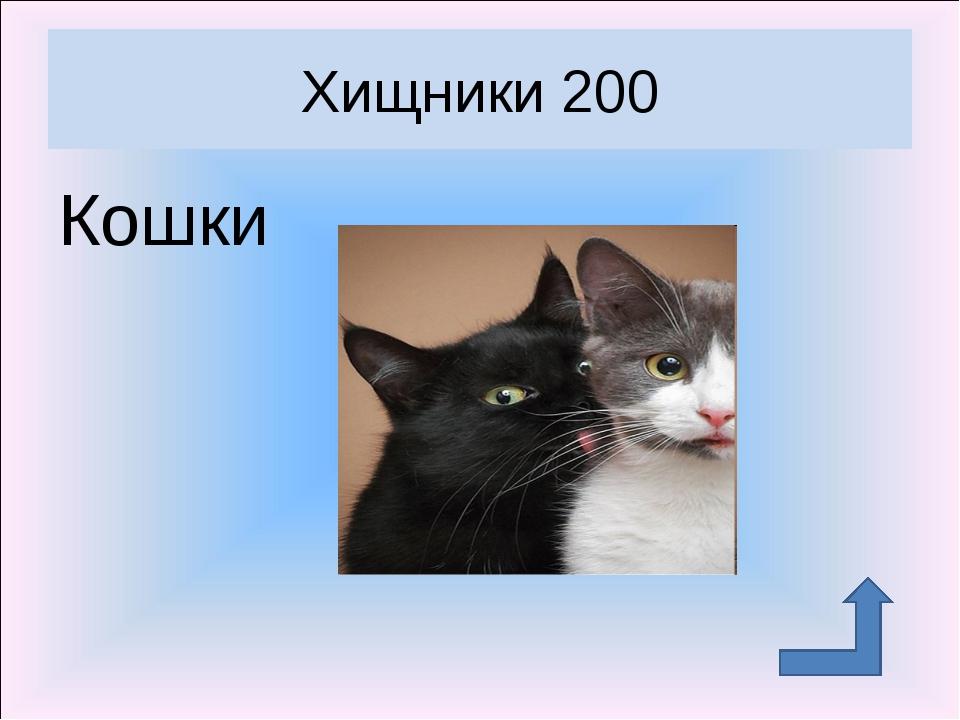 Кошки Хищники 200