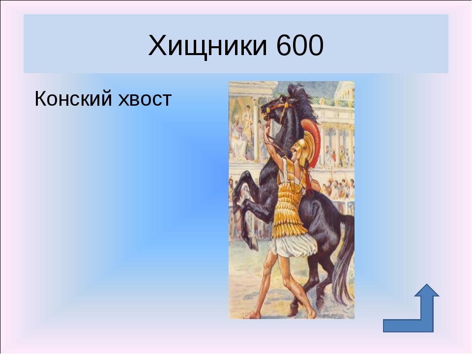 Конский хвост Хищники 600