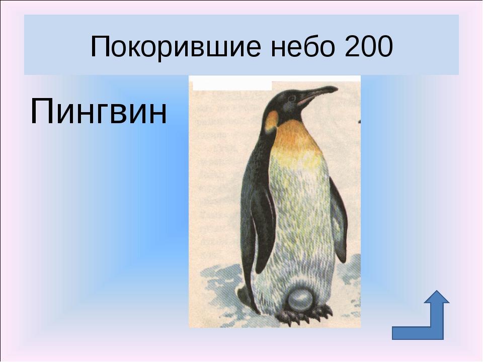 Пингвин Покорившие небо 200