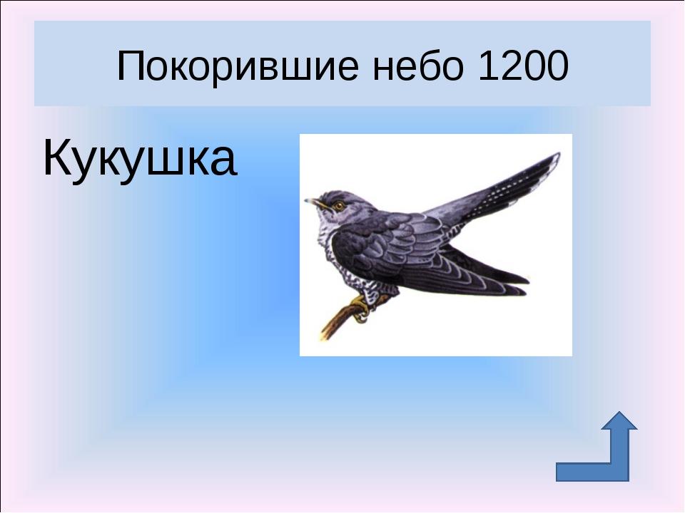 Кукушка Покорившие небо 1200