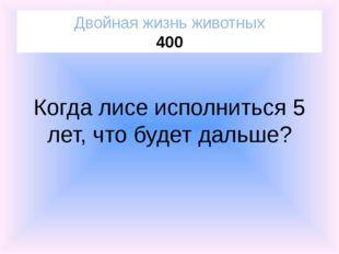 Георгин Посланники Солнца 200