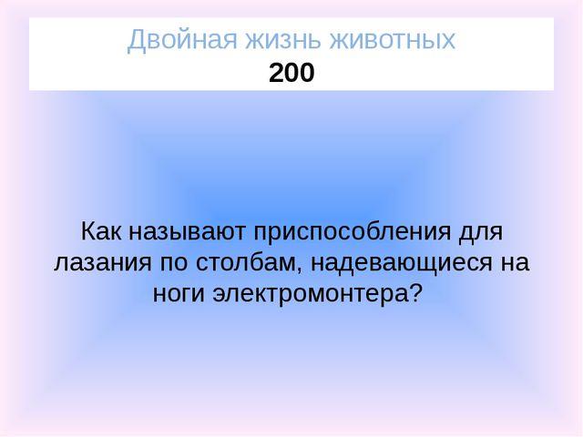 Собачка Двойная жизнь животных 300