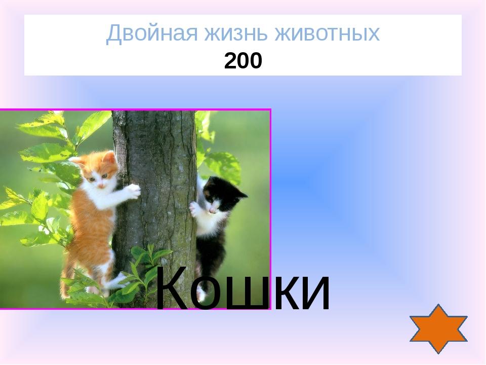 Когда лисе исполниться 5 лет, что будет дальше? Двойная жизнь животных 400