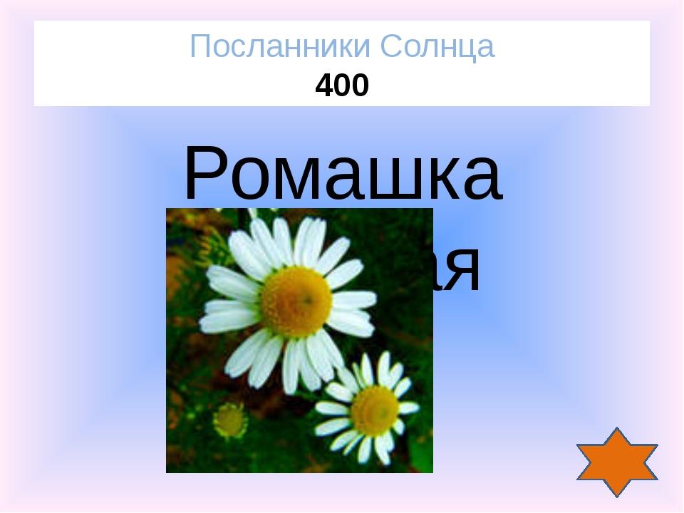 Мухи Насекомые 200