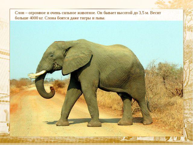 Слон – огромное и очень сильное животное. Он бывает высотой до 3,5 м. Весит...