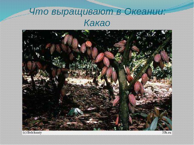 Что выращивают в Океании: Какао
