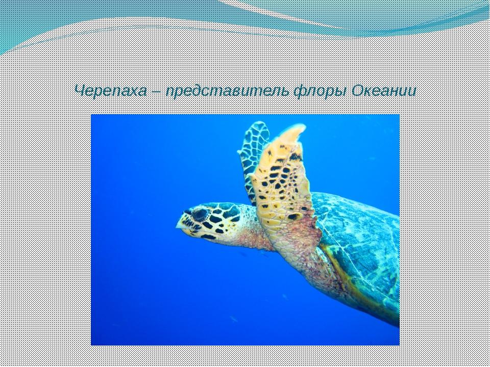 Черепаха – представитель флоры Океании