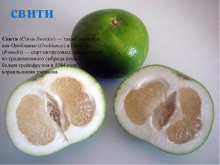 Тамарилло,Томарилло(оно жецифомандра свекольная,помидорно деревоитоматн