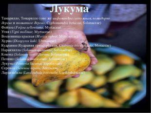 Розовое яблоко(Syzygium jambos;Myrtaceae) Яванское яблоко(Syzygium samaran