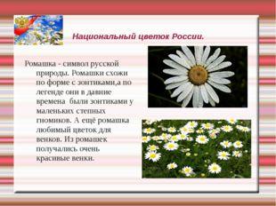 Национальный цветок России. Ромашка - символ русской природы. Ромашки схожи п