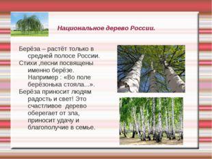 Национальное дерево России. Берёза – растёт только в средней полосе России. С