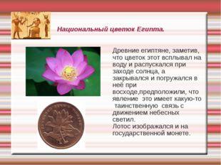 Национальный цветок Египта. Древние египтяне, заметив, что цветок этот всплыв