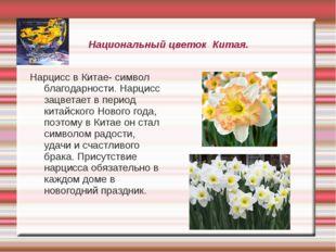Национальный цветок Китая. Нарцисс в Китае- символ благодарности. Нарцисс зац