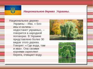 Национальное дерево Украины. Национальное дерево Украины – Ива. « Без ивы и к
