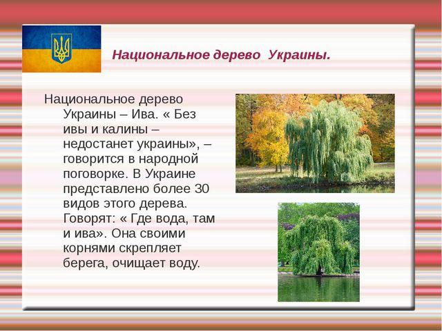 Национальное дерево Украины. Национальное дерево Украины – Ива. « Без ивы и к...