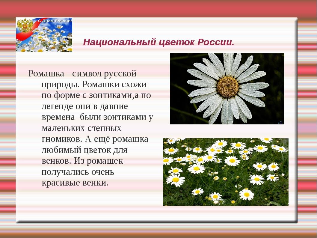 Национальный цветок России. Ромашка - символ русской природы. Ромашки схожи п...