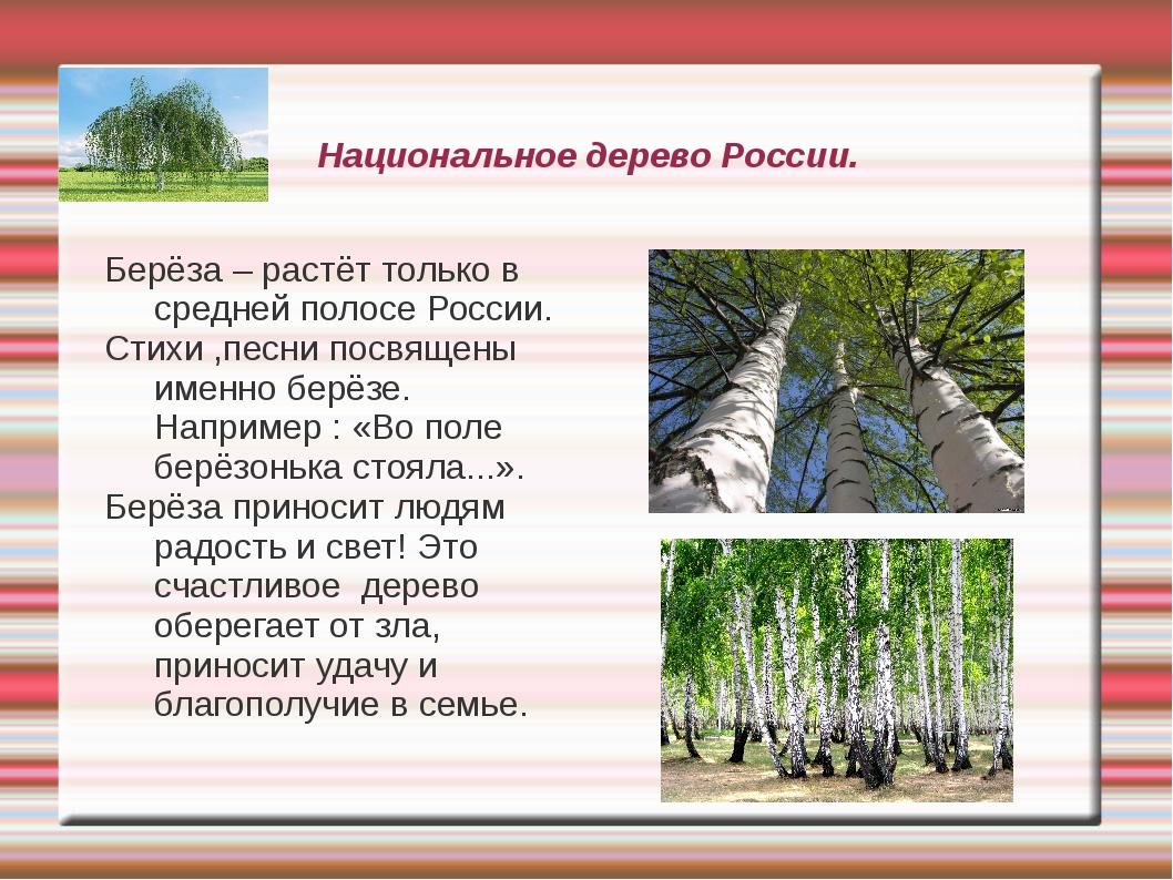 Национальное дерево России. Берёза – растёт только в средней полосе России. С...