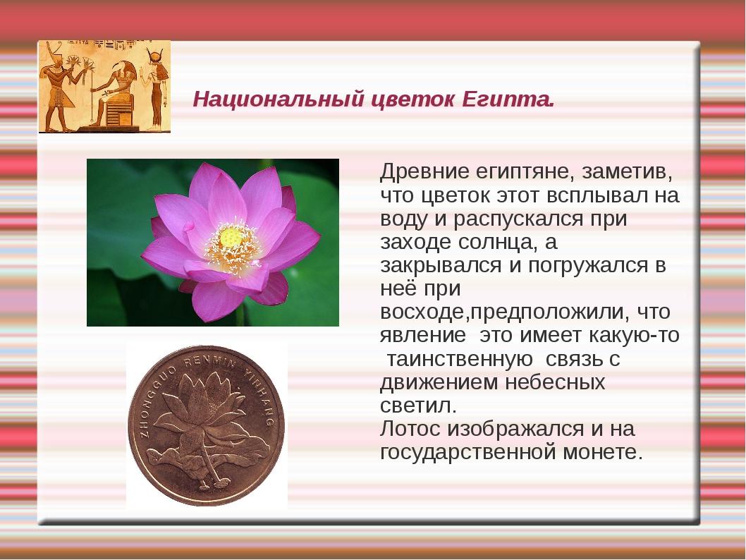 Национальный цветок Египта. Древние египтяне, заметив, что цветок этот всплыв...