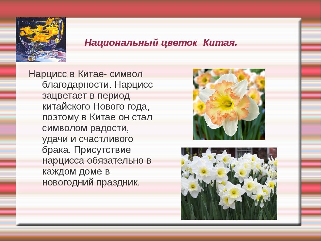 Национальный цветок Китая. Нарцисс в Китае- символ благодарности. Нарцисс зац...