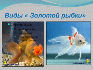 Виды « Золотой рыбки»