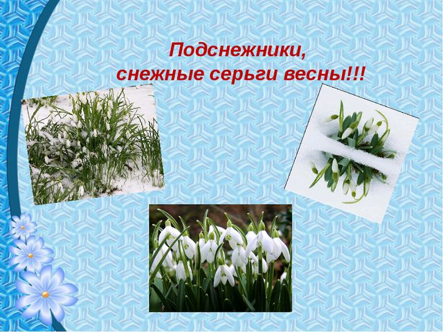 Подснежники, снежные серьги весны!!!