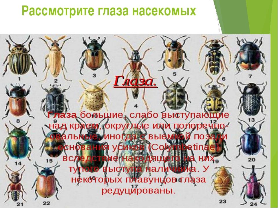 Рассмотрите глаза насекомых