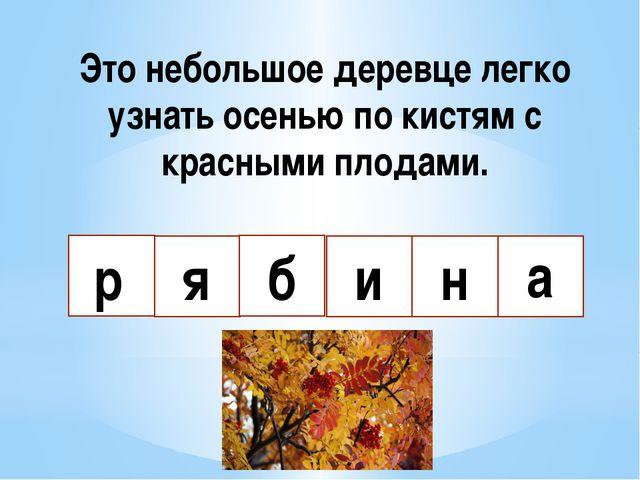 Это небольшое деревце легко узнать осенью по кистям с красными плодами. р я б...