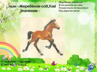 Құлын –Жеребёнок-colt,foal Значение - Жеребенок длинноног - Я его догнать не