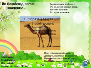Түйе-Верблюд-camel Значение - Редко кушает верблюд – Он не любит разных блюд,