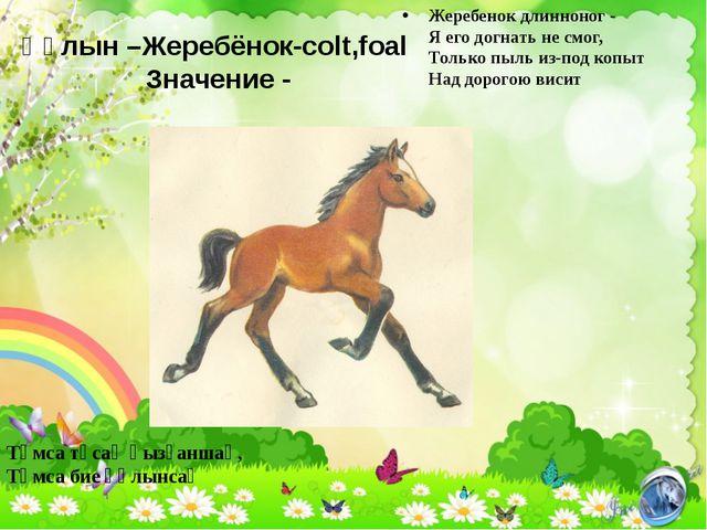 Құлын –Жеребёнок-colt,foal Значение - Жеребенок длинноног - Я его догнать не...