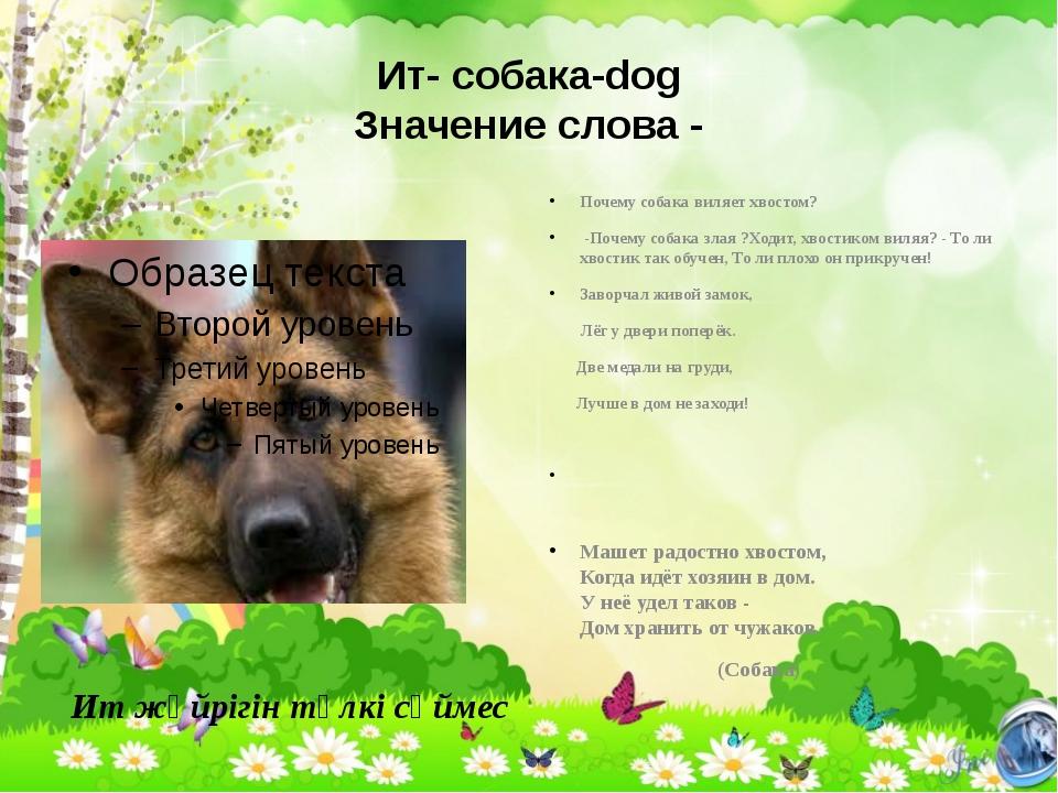 Ит- собака-dog Значение слова - Почему собака виляет хвостом? -Почему собака...