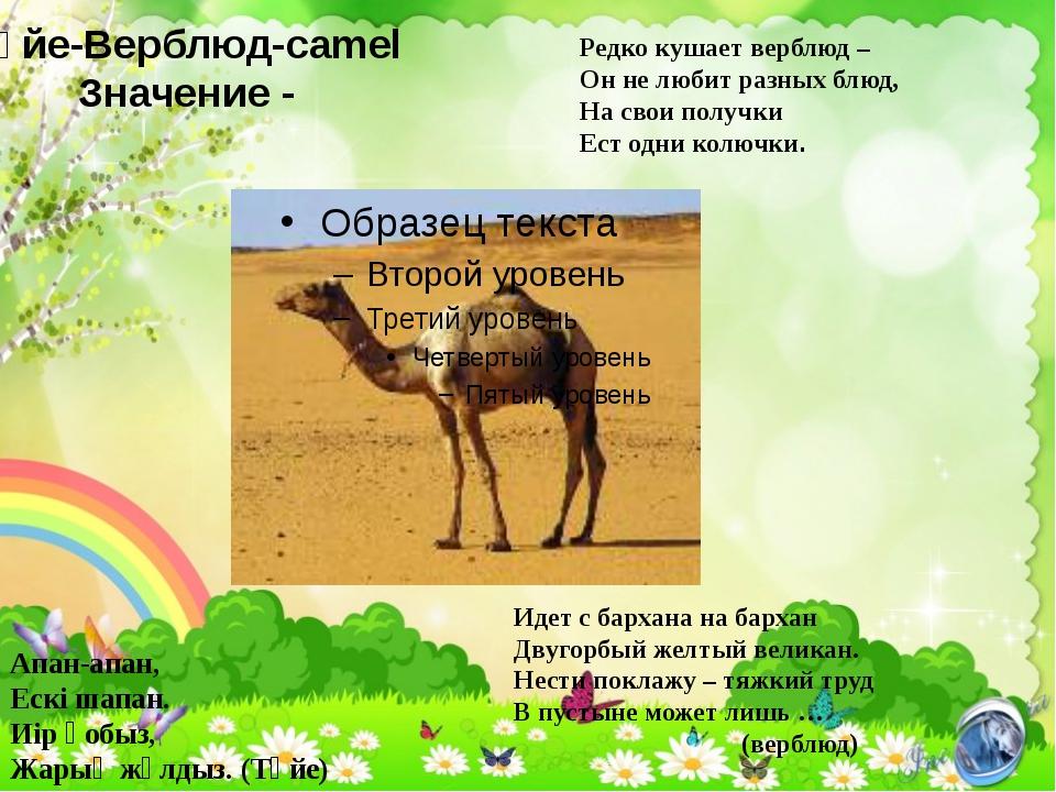 Түйе-Верблюд-camel Значение - Редко кушает верблюд – Он не любит разных блюд,...