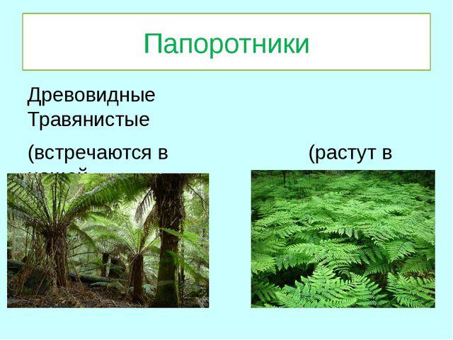 Папоротники Древовидные Травянистые (встречаются в (растут в нашей тропически...