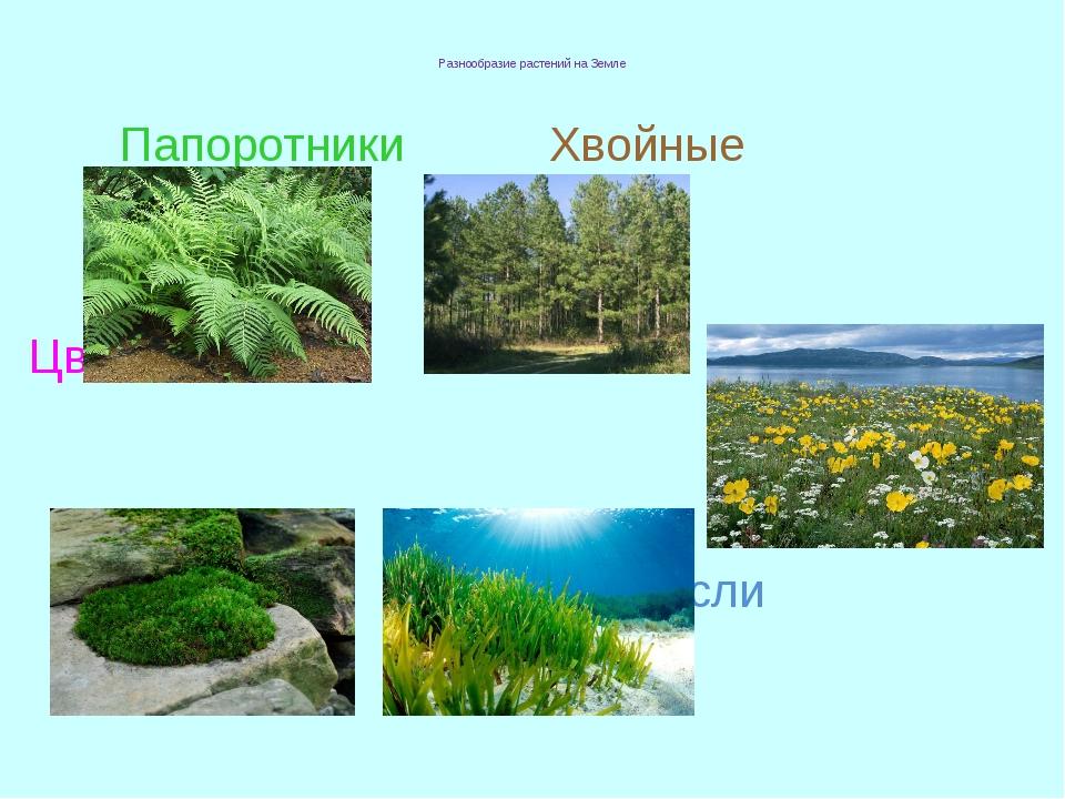 Разнообразие растений на Земле Папоротники Хвойные Цветковые Мхи Водоросли