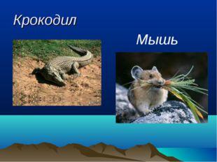 Крокодил Мышь